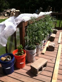 Notice the DIY cold frame of plastic and the porch railing. Yeah, and the recycling bucket.